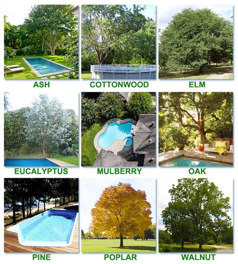best trees best worst trees to plant around a pool intheswim pool
