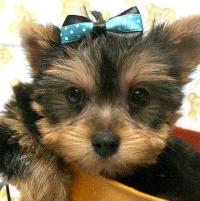 puppy boutique ny l jpg