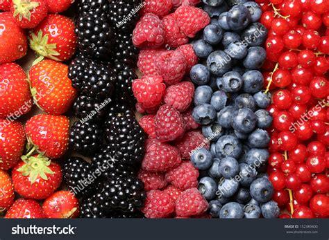 fruit vs berry berry fruits like strawberries blueberries stock photo