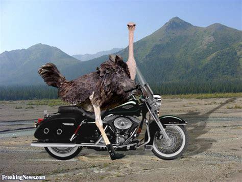 Motorrad Fahren Leicht Gemacht by E Bay Lacher Leicht Gemacht Seite 306 Rennrad News De