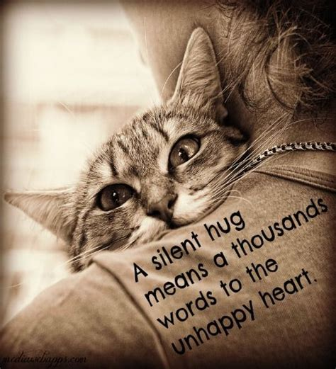 130 Cats Is Way Many by 130 Best Quot Hugs Quot Cure Many Things Images On