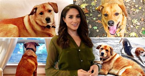 meghan markle dogs meet meghan markle s bogart the rescue pup she has left in canada metro news
