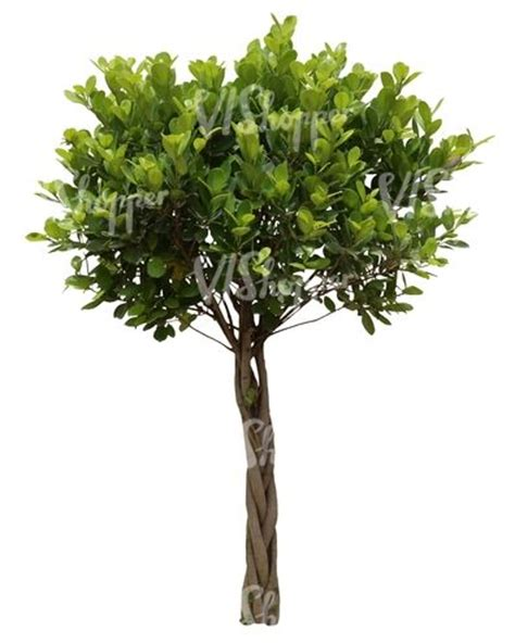 17 best images about cut out plants on pinterest trees rowan and tropical
