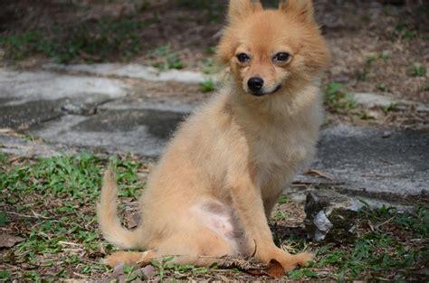 dogs deserve better photos of malaysian dogs deserve better spca seberang perai petfinder my wagazine