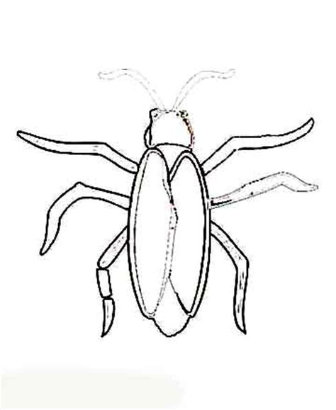 Cockroach Coloring Cockroach Coloring Pages