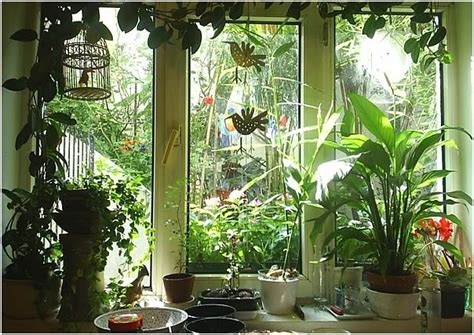north window plants kitchen window things that make me happy pinterest