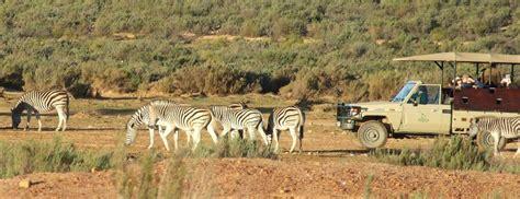 Aqilla Cape aquila reserve cape splendour tours and safaris