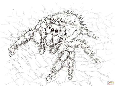daring jumping spider coloring page free printable