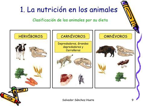 imagenes de animales por su alimentacion tema1 la alimentaci 243 n en los animales