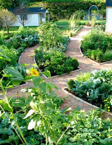 amazing vegetable gardens amazing vegetable herb garden plant water now grow