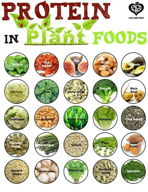 protein in vegetables protein in vegetables food multi recipies tips mixes