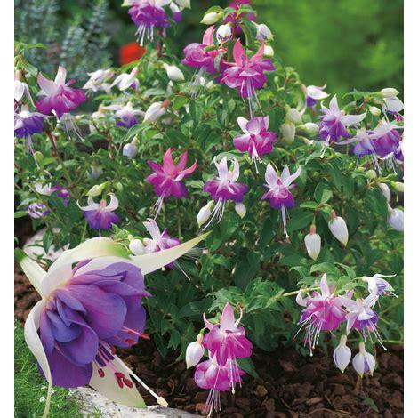 piantare fiori quali fiori piantare a marzo