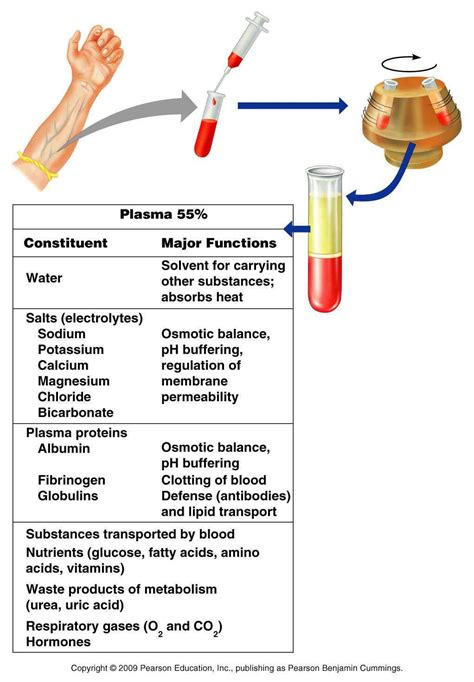 protein in blood chapter 18 electrolytes fluids biology 109 with foley