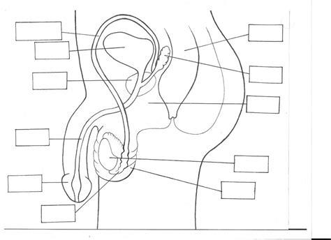 ed diagrams reproductive system diagram blank world of diagrams