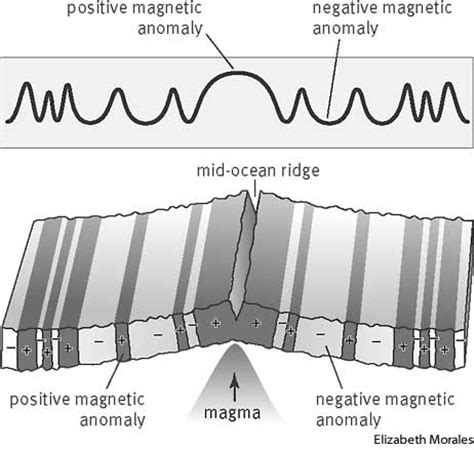 Pattern Of Magnetic Reversal | magnetic reversal dictionary definition magnetic
