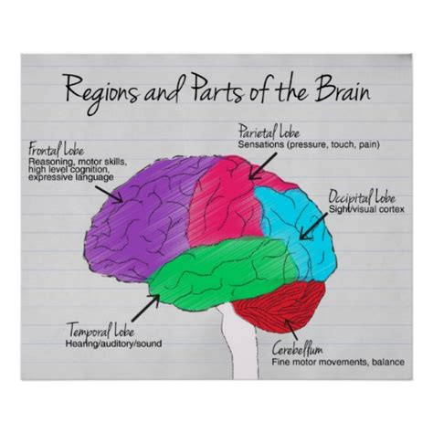 Regions Gift Card - regions and parts of the brain poster zazzle