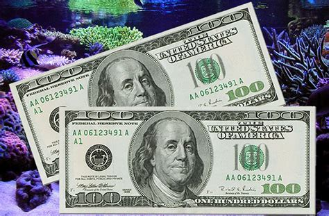 Money Winning Contests - show me the money contest win 200 drawing date dec 8th reef2reef saltwater and