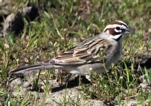 birds of san francisco bay area sfbaywildlife info
