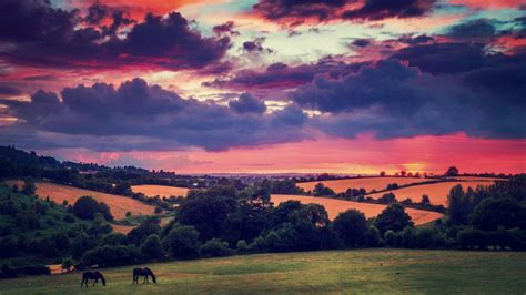 sunset clouds landscapes nature trees animals fields hills