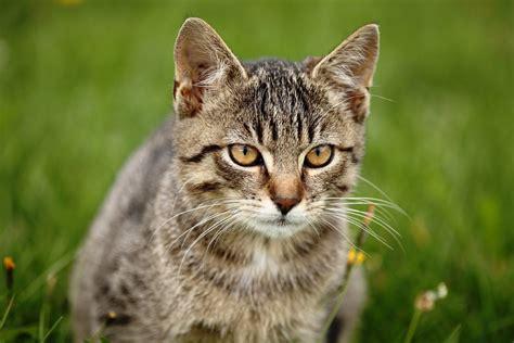 a cat for photographers 24 7 professional pet photographers