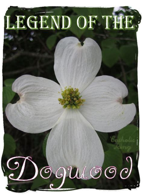 the legends of easter treasury inspirational stories of faith and books dogwood flower symbolism flower inspiration