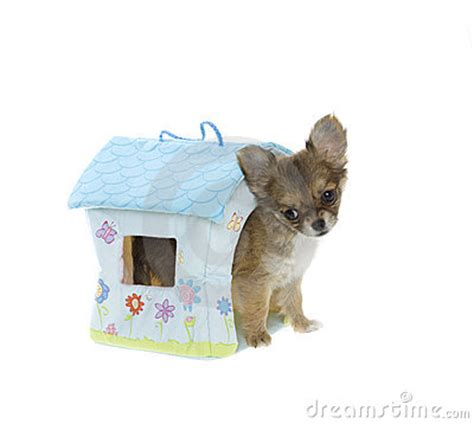 toy dog house puppy inside soft toy dog house stock images image 15540424
