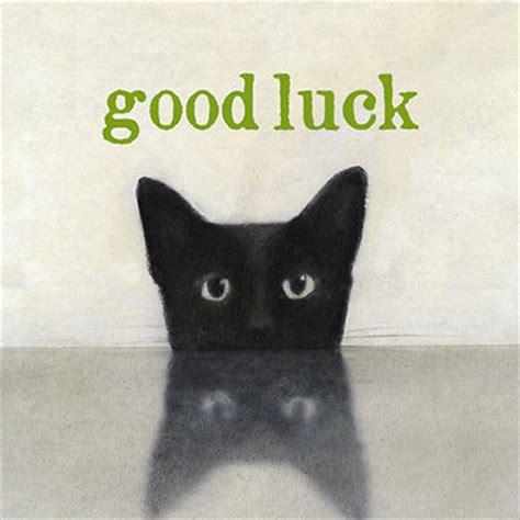 Good Luck Cat Meme - good luck meme free hd wallpapers