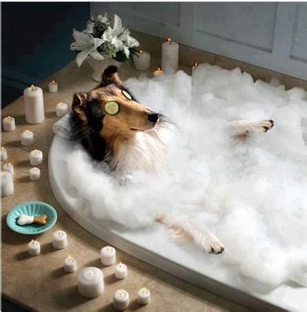 dog in a bathtub forum for freddy dog of the week jan 19 to 25 2015