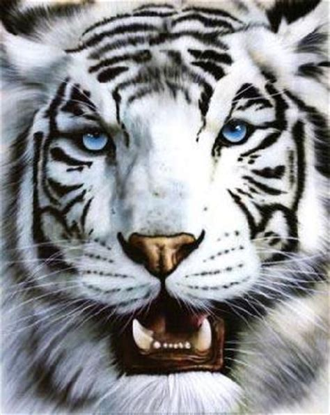 imagenes de tigres leones y leopardos manos a la ciencia felidos panteras negras tigres