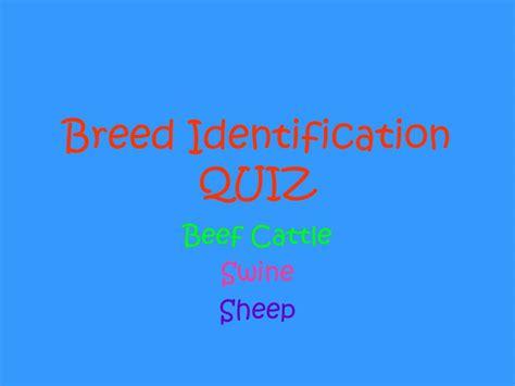 breed identification quiz ppt breed identification powerpoint presentation id 708450