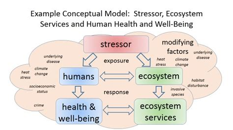 the human in health and illness e book books integrating human health and well being with ecosystem
