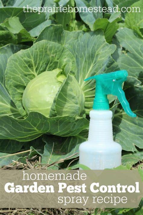 Organic Pest Control Garden Spray Recipe Gardens Organic Pest Vegetable Garden