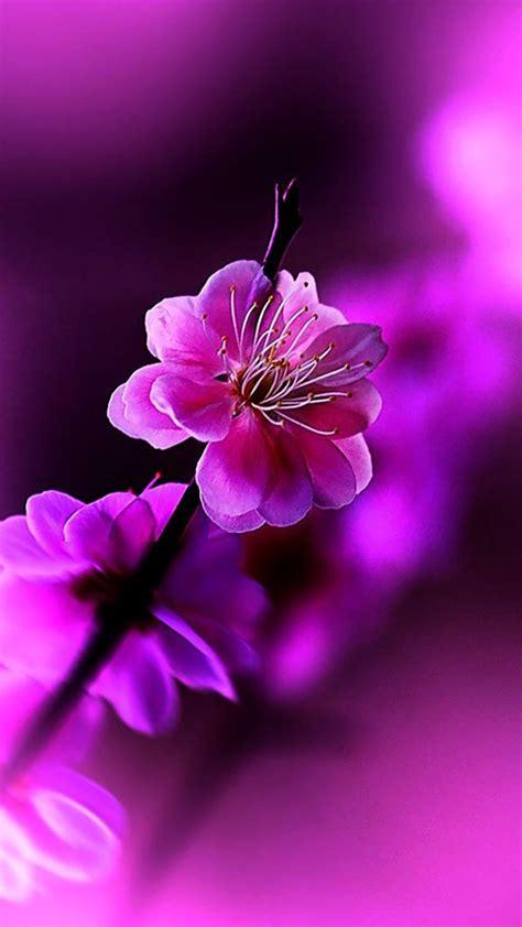 flowers violet hd flower wallpaper iphone spring