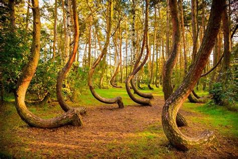 poland s cool crooked forest 30 reasons why we need to save the environment femina in