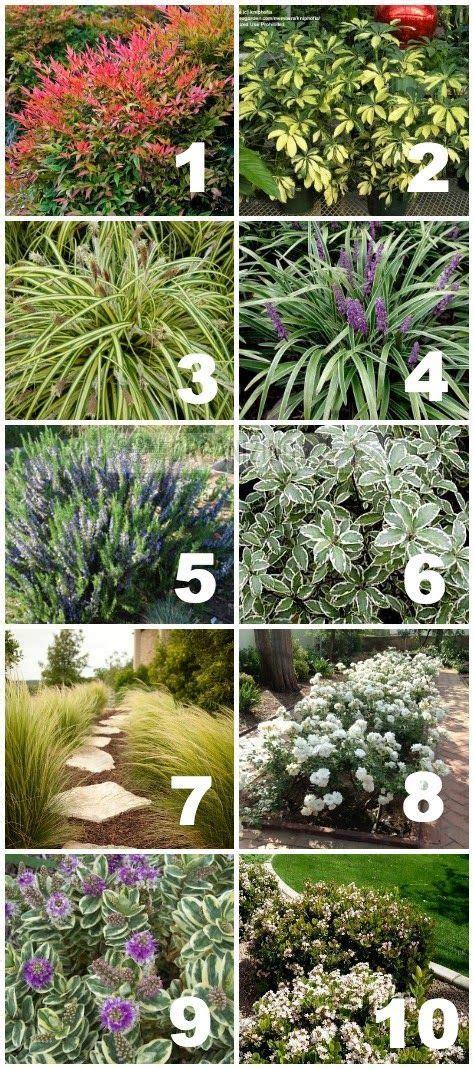 Tuscan Garden Ideas Best 25 Drought Tolerant Ideas On Drought Tolerant Garden Drought Tolerant