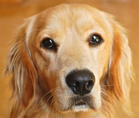 puppy diseases pin skin diseases pictures disorders on