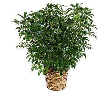 common house plants for funerals send plants planters in wi felly s flowers