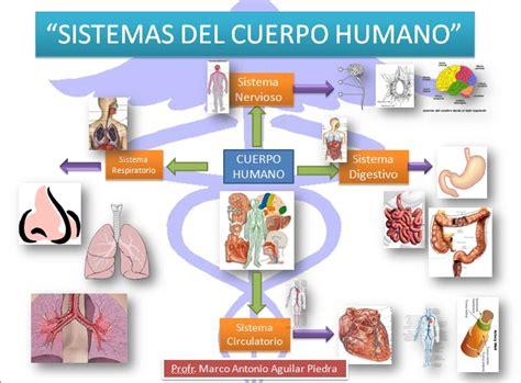 imagenes mapa mental del cuerpo humano uso didactico de las tics sistemas del cuerpo humano