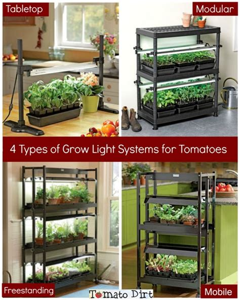 grow lights for tomatoes choosing a grow light system for growing tomatoes from seed