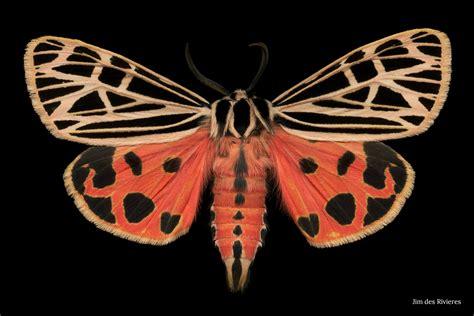 blog national moth week exploring nighttime nature