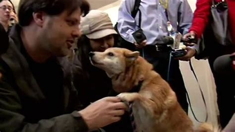 california family reunites  lost dog   years