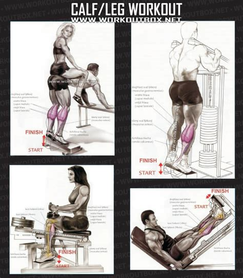 calf leg workout healthy fitness exercises low