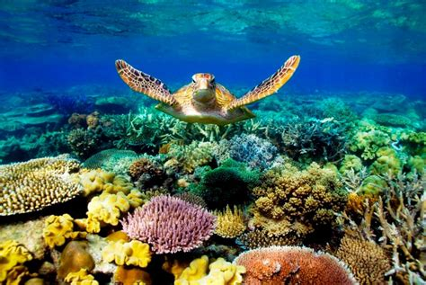 best underwater top 10 wonders of the underwater world places to see in