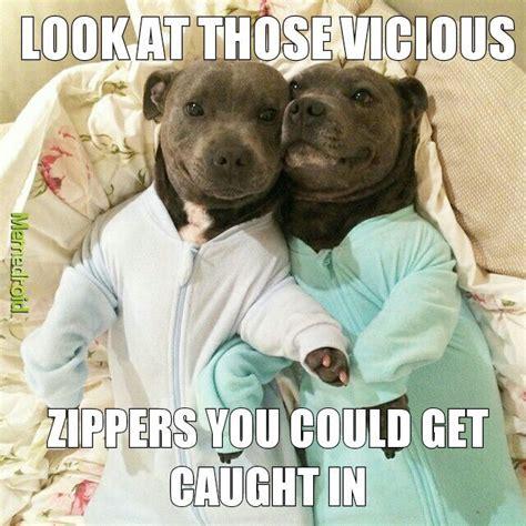 Pitbull Meme - the best pitbull memes memedroid