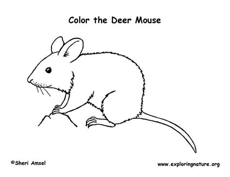 deer mouse coloring page mouse coloring page