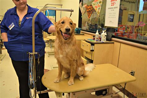 puppies at petsmart petsmart grooming review looking sharp feeling