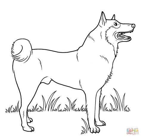 free coloring pages of husky real