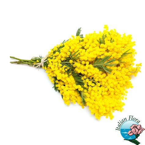 mazzo di fiori con mimose mazzo di mimose