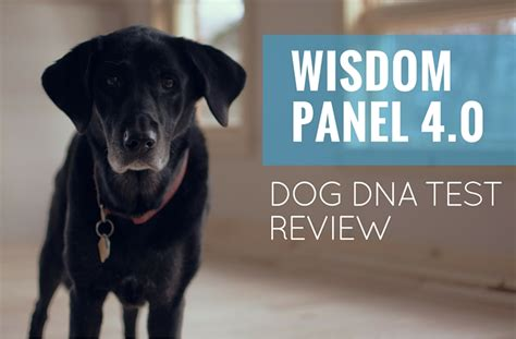 wisdom panel dna wisdom panel 4 0 dna test 2018 review