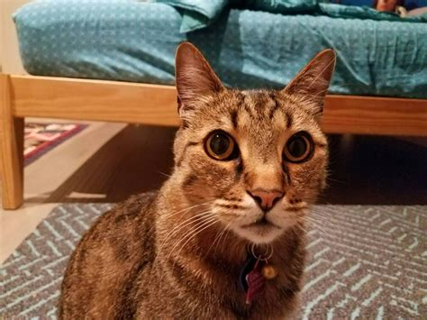 Show Me Your Cat Eye 5 by Show Us Your Cat Gretsch Talk Forum